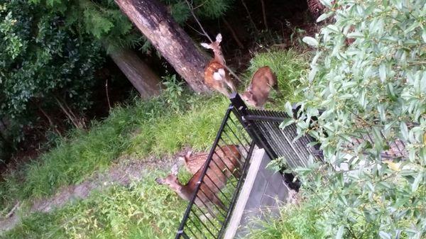 家の鹿.jpg