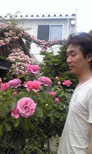 綺麗なバラと.jpg